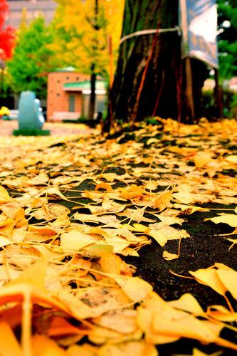今日の一枚「秋は紅葉」