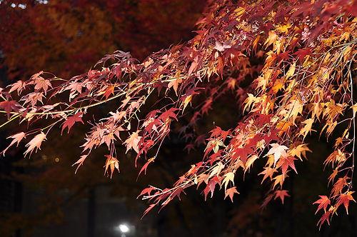 小布施では紅葉(もみじ)が綺麗で、ついつい撮影。