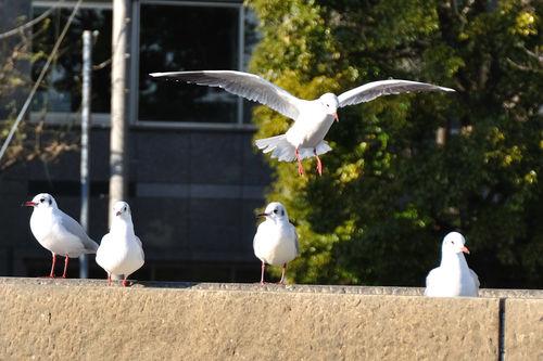 今日の一枚「隅田川の鳥」