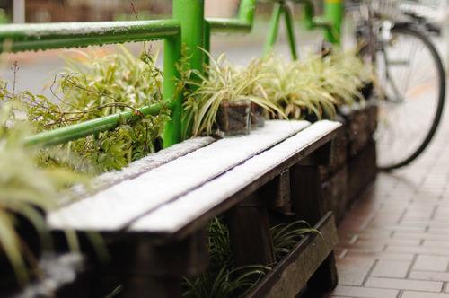 今日の一枚「雪の日」