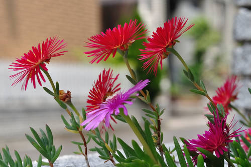 今日の一枚「花」