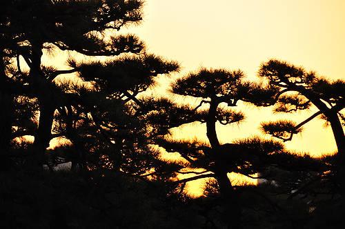 今日の一枚「松林の夕暮」