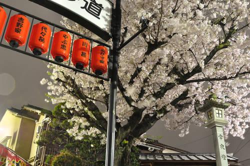 今日の一枚「夜桜」